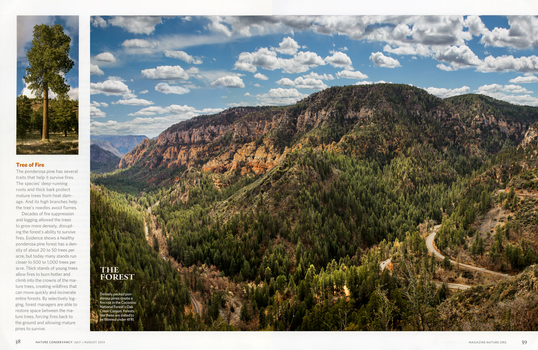 Nature Conservancy: The Forrest. SPREAD 4: Coconino National Forrest