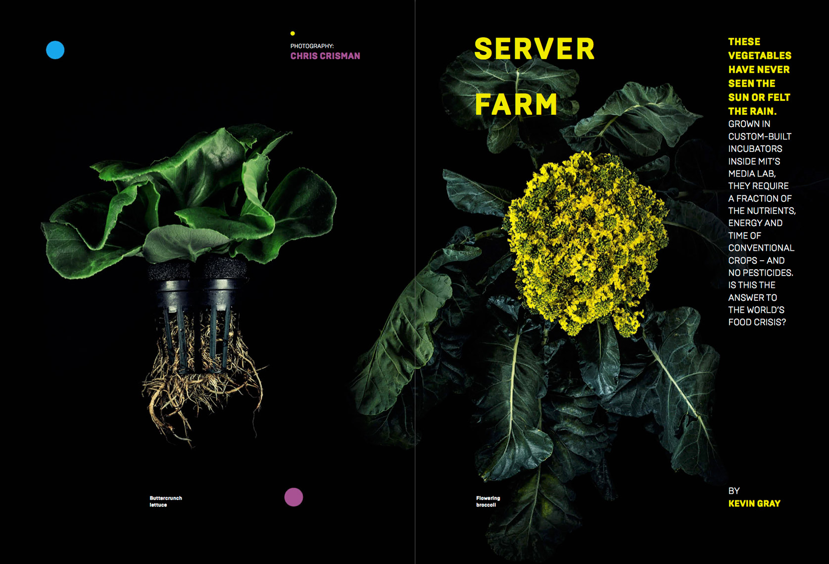 WIRED UK - OCTOBER 2014 - CITY FARM Feature - Spread 1 - photographer Chris Crisman